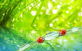 Picture grass, water, drops, macro, nature, Rosa, morning, nature, water, ladybugs, macro, morning, the grass, ladybugs, …