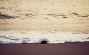 Picture foam, wave, Shore