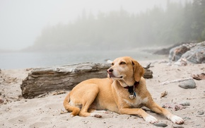 Picture nature, each, Foggy dog