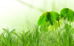 Picture greens, grass, spring, Bush