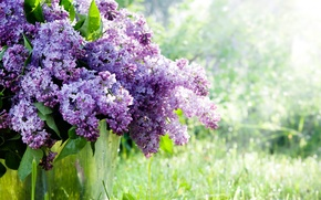 Picture tree, Spring, lilac