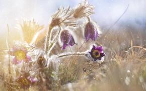 Picture drops, macro, light, flowers, haze