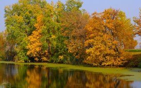 Picture green, river, yellow, autumn