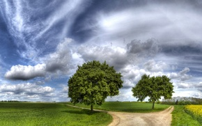 Picture road, the sky, grass, clouds, trees