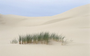 Picture sand, grass, Desert