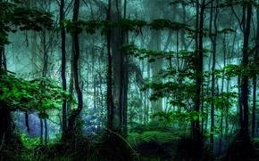 Picture forest, tropics, jungle, haze, Selva