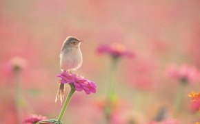 Wallpaper flowers, flowerbed, Warbler, bird