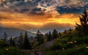 Picture the sky, clouds, trees, flowers, mountains, treatment, Switzerland