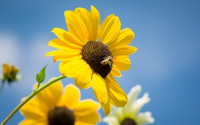 Picture leaves, flowers, petals, stem, bees, blue sky