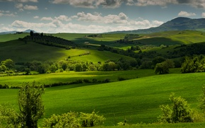 Picture greens, grass, clouds, trees, hills, field, Italy, meadows, Tuscany, Tuscany