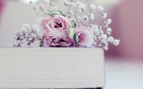 Picture flowers, book, buds