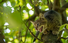 Picture tree, kitty, on the tree, scared, pisklya
