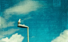 Picture the sky, letter, style, bird