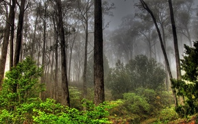 Picture greens, forest, grass, leaves, trees, fog, the bushes