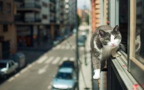 Picture cat, look, the city, street