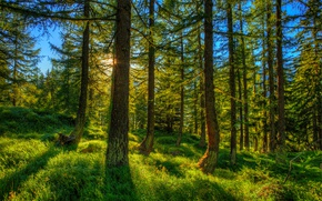 Picture Nature, Grass, Trees, Switzerland, Forest, Spruce, Trunk