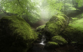 Wallpaper moss, stream, nature, forest, greens, stones