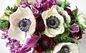 Picture bouquet, irises, anemones, Bouquets