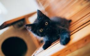 Picture black, baby, kitty, black kitten