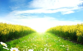 Picture field, the sky, the sun, clouds, landscape, blue, chamomile, spring, track, bright, green, pathway, Green …