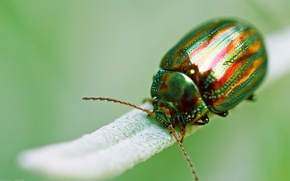 Picture macro, green, beetle, insect, Golden