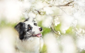 Picture look, each, dog, garden