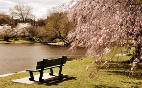 Picture trees, bench, pond, Park, USA, Boston, Massachusetts