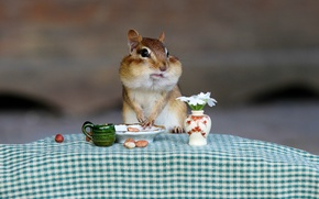 Wallpaper animal, Chipmunk, Breakfast, the situation