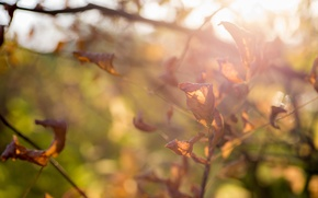 Picture autumn, leaves, beautiful, bright