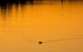 Picture birds, night, lake
