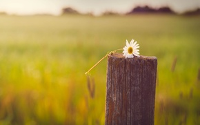 Picture flowers, widescreen, blur, HD wallpapers, Wallpaper, tree, full screen, background, post, Daisy, fullscreen, yellow, macro, ...