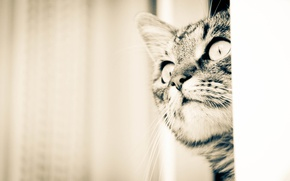 Picture animals, cat, beautiful, home, favorite