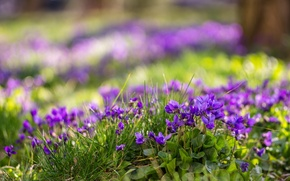 Picture flowers, spring, nature