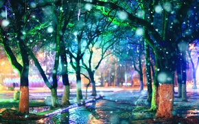 Picture trees, rain, the evening, alley