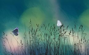 Wallpaper grass, butterfly, nature