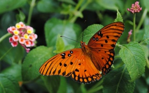 Picture Macro, Butterfly, Macro, Butterfly, Green leaves, Green leaves