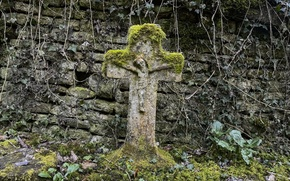 Picture moss, cross, cemetery