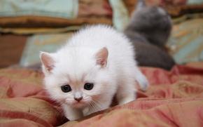 Picture cat, cat, cute, sneaks