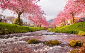 Picture the sky, trees, flowers, bridge, river, home, spring