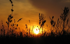 Wallpaper the sun, Ukraine, the steppe, bird, sunset