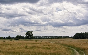 Picture field, summer, clouds