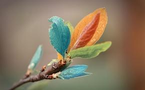 Picture leaves, macro, sprig, color, macro
