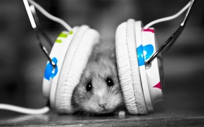 Wallpaper music, mouse, headphones