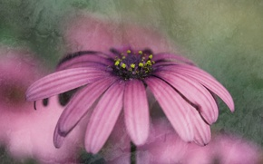 Picture flower, pink, flower, pink
