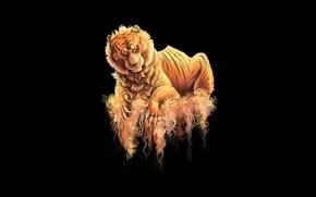 Picture tiger, the dark background, predator, tiger