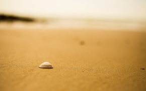 Wallpaper bokeh, shell, beach, sand