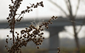 Picture autumn, Grass, fluff, dry