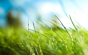 Picture leaves, green, Grass