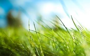 Wallpaper Grass, green, leaves