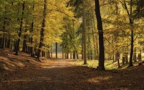 Picture road, autumn, trees, Park